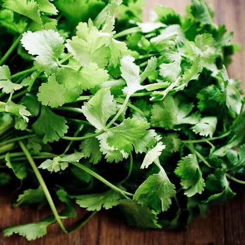 Shop Fresh Cilantro in Singapore - The New Grocer