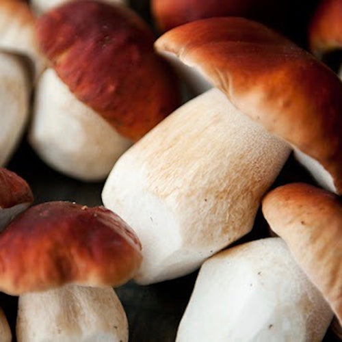 Shop Mushroom & Porcini Cork in Singapore - The New Grocer