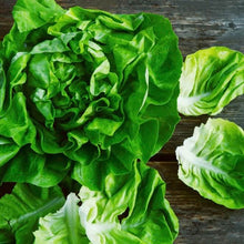 Load image into Gallery viewer, lettuce-butterhead-online-grocery-supermarket-delivery-singapore-thenewgrocer