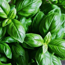 Load image into Gallery viewer, fresh-basil-leaf-online-grocery-supermarket-delivery-singapore-thenewgrocer