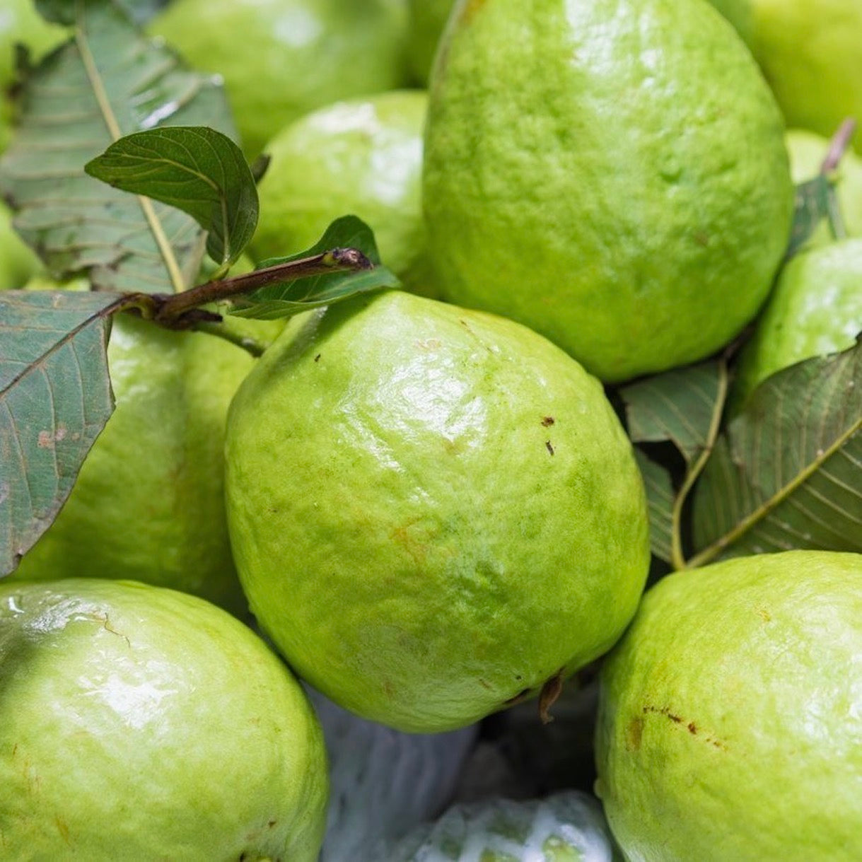guava-online-grocery-supermarket-thenewgrocer-delivery-singapore