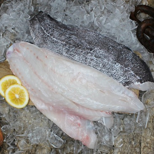 Buy Wild caught fish Hapuka in Singapore - The New Grocer