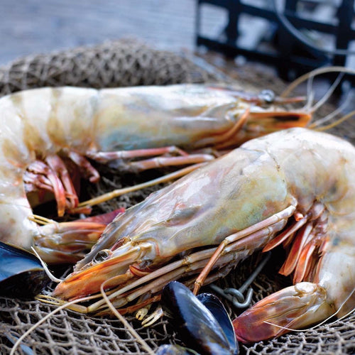 Buy King Prawns in Singapore - The New Grocer