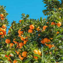 Load image into Gallery viewer, oranges-from-egypt-online-delivery-grocery-supermarket-singapore-thenewgrocer