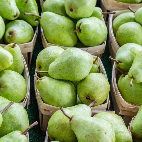 Shop Australian Pear & Fruits in Singapore - The New Grocer