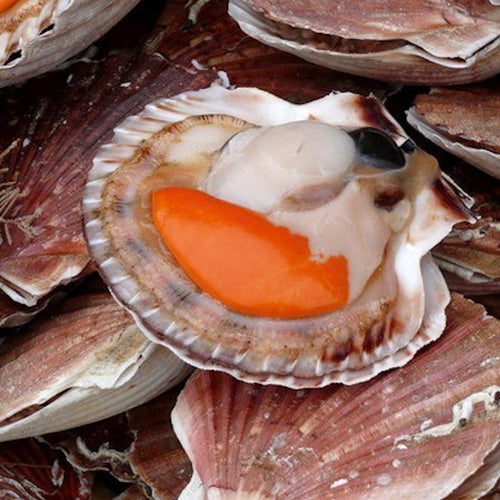 Buy Half Shell Scallop in Singapore - The New Grocer