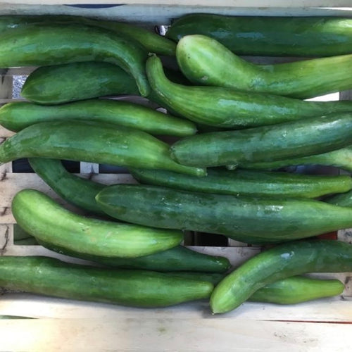 the-ugly-japanese-cucumber-online-grocery-supermarket-delivery-singapore-thenewgrocer