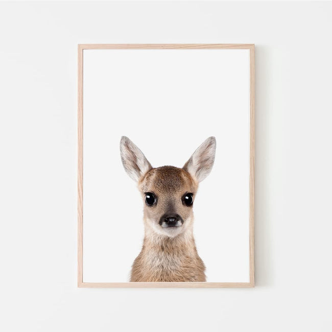 Animal Photography - Deer