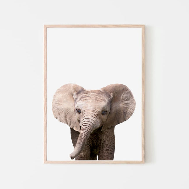 Animal Photography - Elephant