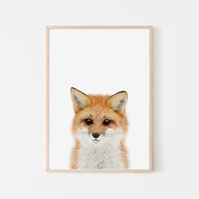 Animal Photography - Fox