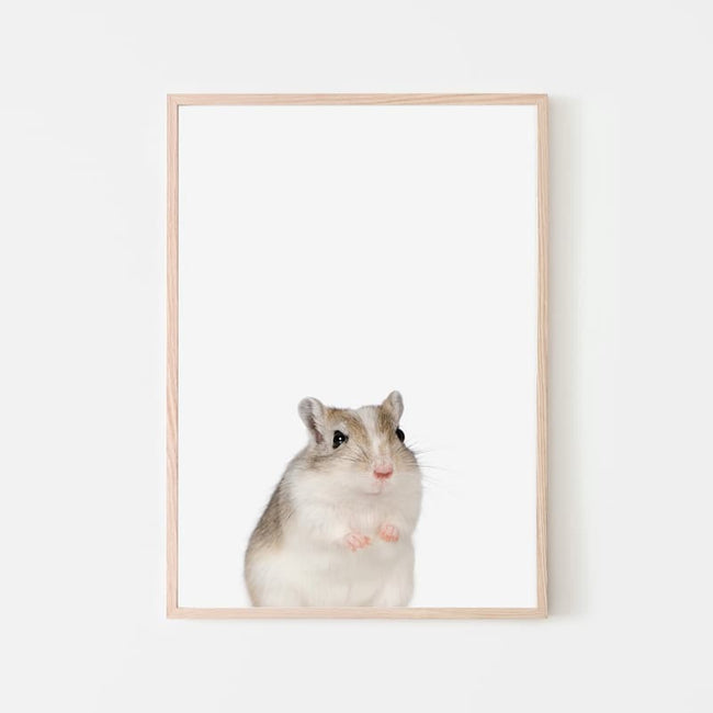Animal Photography - Gerbil