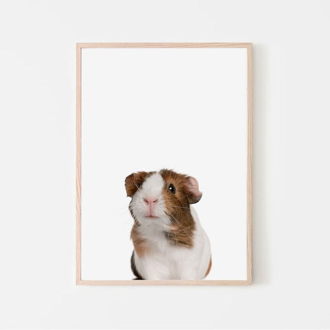 Animal Photography - Guinea Pig