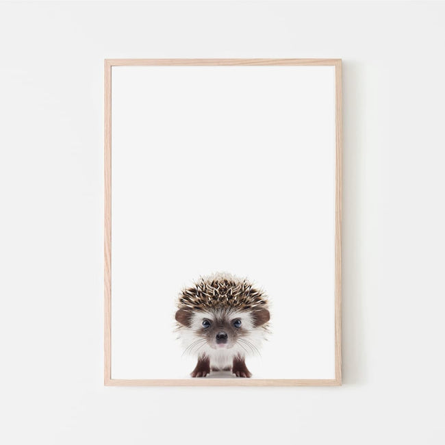 Animal Photography - Hedgehog