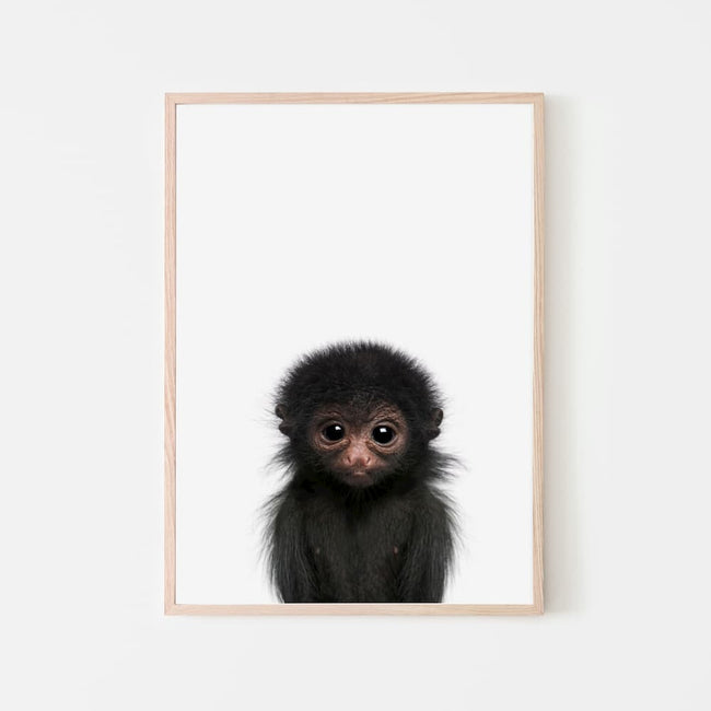 Animal Photography - Monkey
