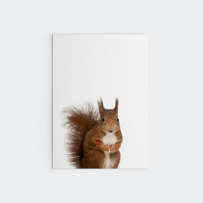 Animal Photography - Squirrel