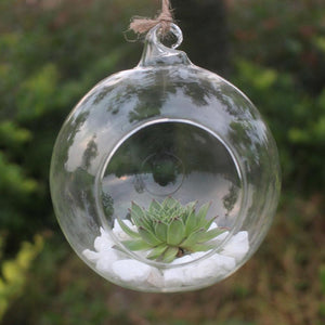 6pc Flower Glass Terrarium Hydroponic Vintage Round Ball style Plant Flower Pot Transparent Vase hanging Plant Home Bonsai Decor - LikeRE Marketplace