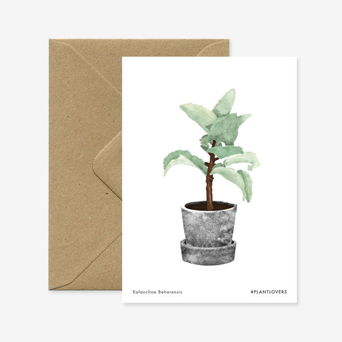 Karte «Kalanchoe» von All the ways to say
