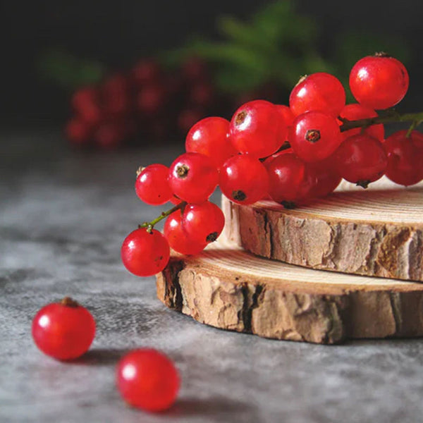 Red Currant | 3 Wick Candle
