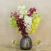 Cymbidium Mix Cut Orchids 60cm tall (8 Stems Box)