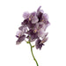 Cut Vanda Orchid Divana Antique Mauve Plum ( 4 Stems Box)