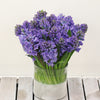 Fragrant Hyacinths Blue