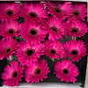 15 Gerbera Diamond