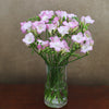 10 Scented Pink Freesia