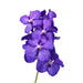 Vanda Blue Magic ( 4 Stems Box)