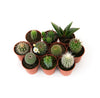 Cactus Mix House Plants