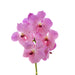 Vanda Rose Kiss ( 4 Stems Box)