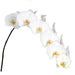 Sensation White Phalaenopsis 10-13 ( 4 Stems Box)