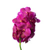 Cut Vanda Sumathi Magic Fuchsia  ( 4 Stems Box)