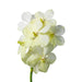 Cut Vanda Orchid Tayanee White( 4 Stems Box)