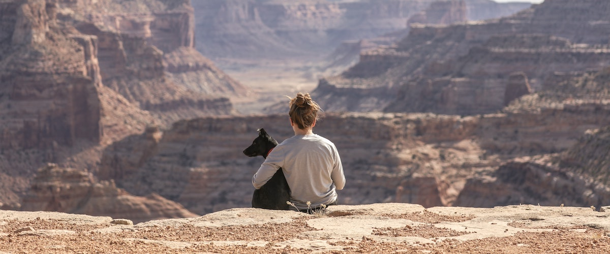 Dog Holiday And Travelling Tips