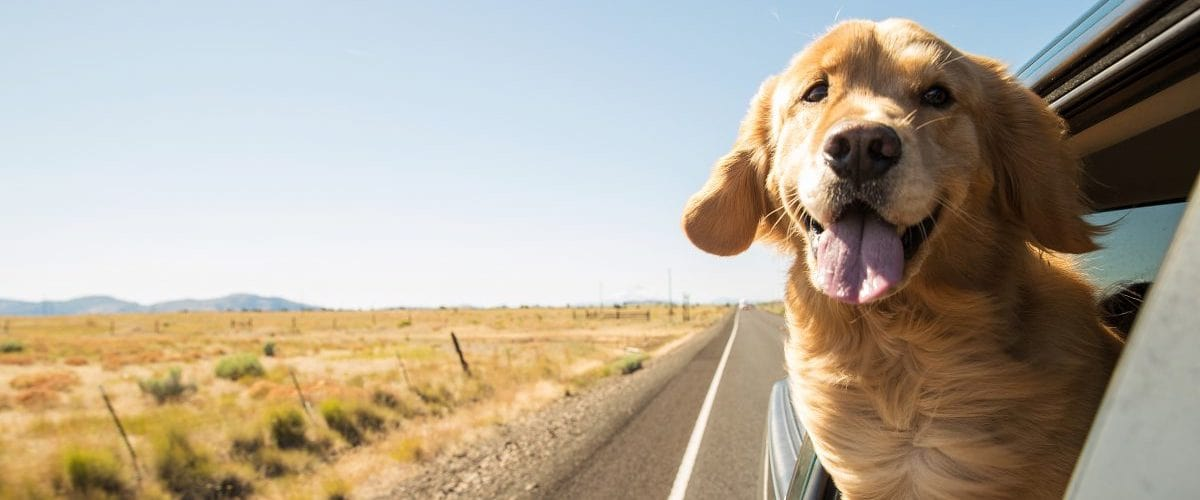 Dog Travelling By Car and Airplane Tips