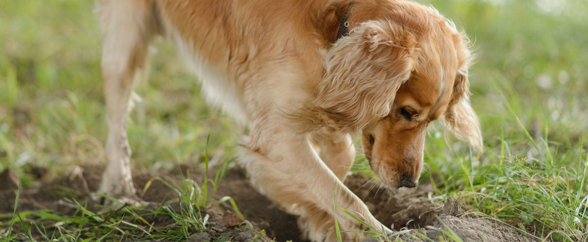 How To Stop Dog From Digging