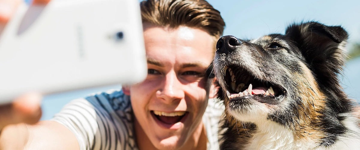 How To Take Photos Of Your Dog