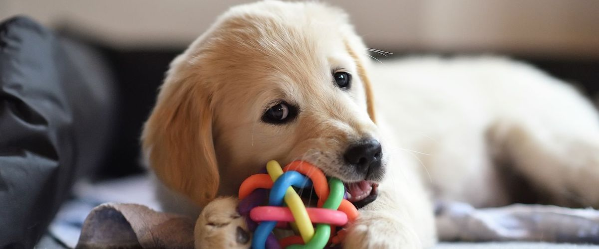 Puppy Proofing Home With Chew Toys