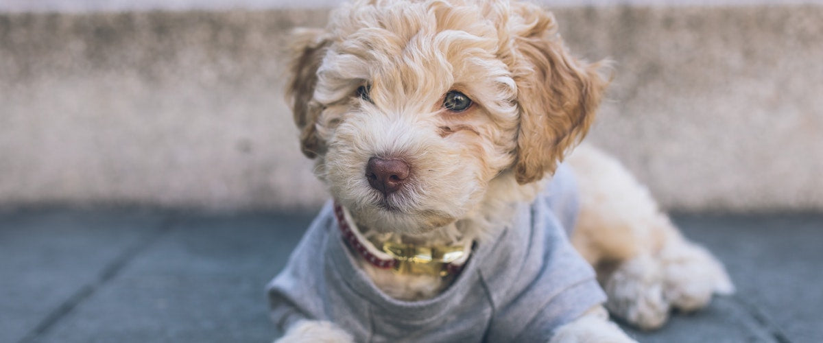 Puppy wearing clothes