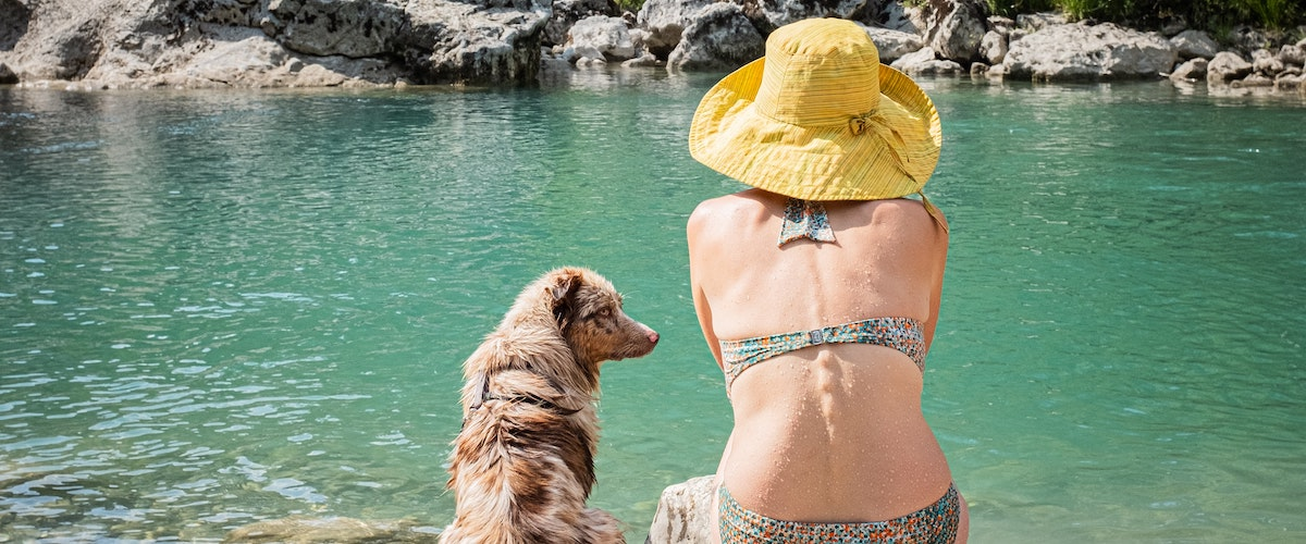 Tips For Taking Your Dog Travelling