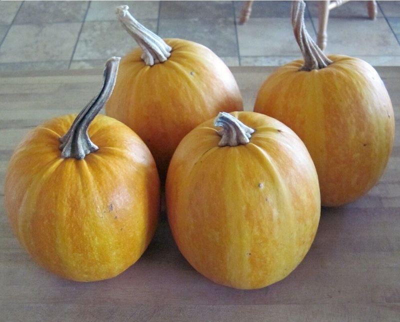 10 Organic seeds Lady Godiva Extremely RARE Hull-less Pumpkin Beautiful