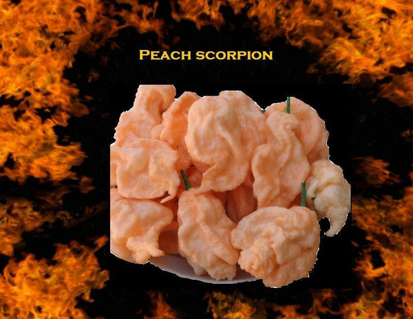 10 seeds Jays Peach Ghost Scorpion Bhut jolokia & Scorpion Hot pepper cross