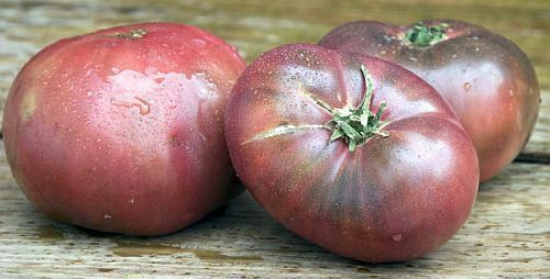 100 Cherokee Purple Tomato Seeds Rare Beautiful Heirloom black DELICIOUS Large