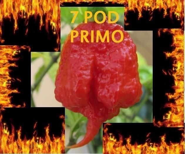 1000 Seeds Trinidad 7 Pod (7 Pot) PRIMO Rare Hottest Pepper World Record EXTREME