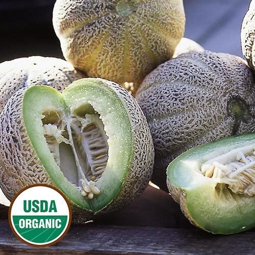 15 Seeds Edens Gem (Rocky Ford) ORGANIC Cantaloupe Melon Heirloom Fragrant Spicy