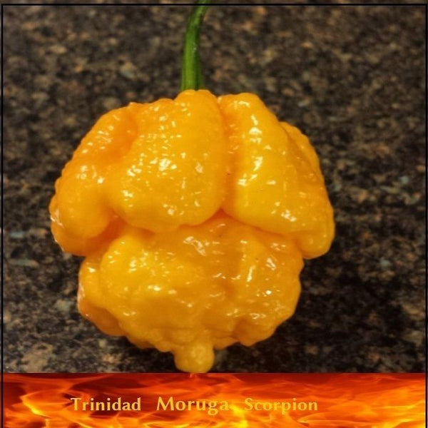 20 Seeds Yellow Trinidad Moruga Scorpion Hottest Chili pepper EXTREME Rare Chile