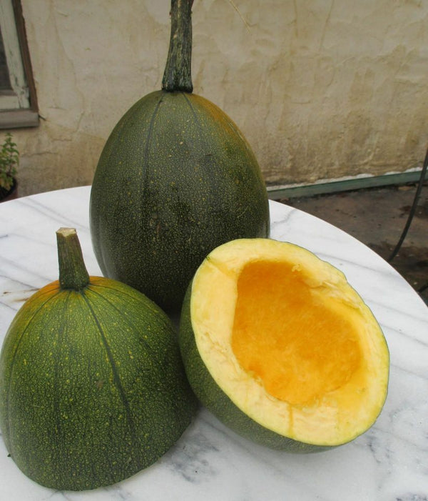 20 Tatume Summer Squash Seeds Heirloom Free shipping Calabash Mexican Zucchini