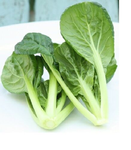 200 Seeds Tatsoi Green Asian Mustard Thick Heirloom Tender High Vitamin! Spinach