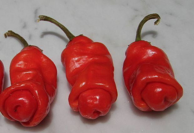 25 seeds red Peter Pepper Heirloom Very Hot XXX rare hilarious & unique gift!