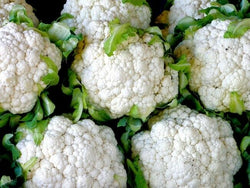 "3 Live 3 - 5"" inch Seedlings SnowBall Y Cauliflower Improved Healthy Heirloom"